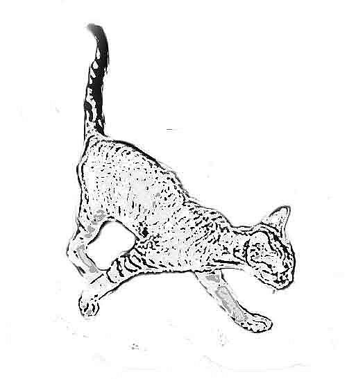 måla en katt
