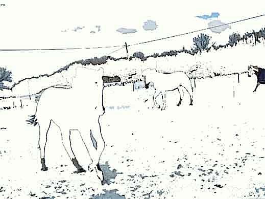 måla en häst