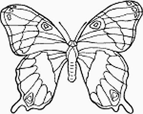 måla  en fjäril